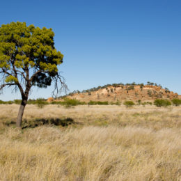 Having a connection with the land — Native title claim (#2) by the Jangga People